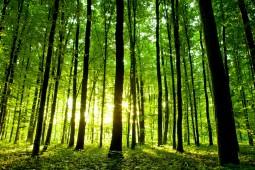 Pourquoi se chauffer au bois ?